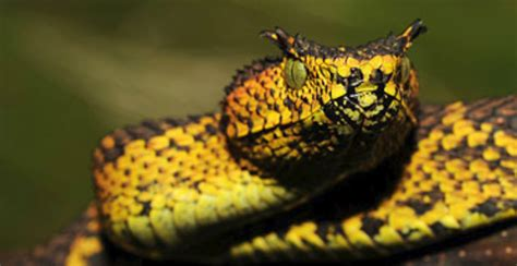 Spectacular Snake Species Discovered in Tanzania   Biology